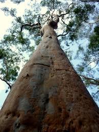 native plants of the sydney region geography of sydney wikipedia