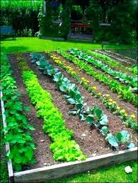 Garden Allotment Ideas Vegetable Garden Layout Ideas Alexstand Club