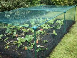 butterfly protection cages brassica vegetables frames