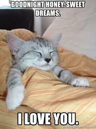 Sweet Dreams Meme - goodnight honey sweet dreams i love you sleeping cats meme
