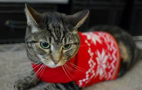 sweaters for cats these 26 cats wearing sweaters will put a smile on your