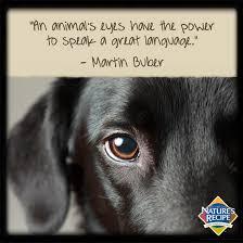boxer dog sayings an animal u0027s eyes have the power to speak a great language