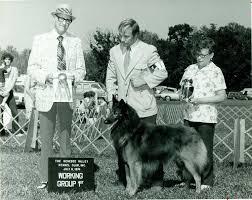 belgian sheepdog merchandise belgian tervuren history u0026 training temperament