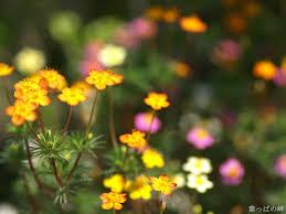 beautiful plants beautiful photography of flowers u2013 savingourboys info