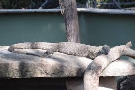 Rockhton Botanic Gardens And Zoo Rockhton Botanical Gardens And Zoo Australia East Coast