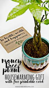 money tree plant housewarming gift brie brie blooms