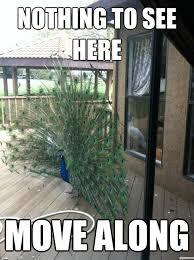 Peacock Meme - suspicious peacock weknowmemes generator