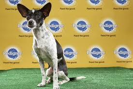 bluetick coonhound terrier mix puppy bowl xiii starting lineup puppy bowl animal planet
