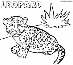 drawn leopard coloring page pencil and in color drawn leopard