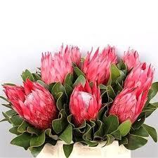 flowers uk proteas wholesale flowers uk wedding flowers protea