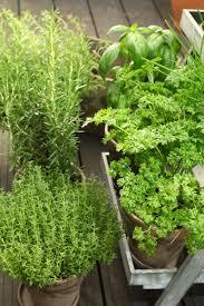 les herbes de cuisine quelle est la meilleure méthode pour congeler les herbes