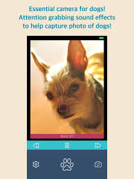 Bark Camera For Dog on the App Store