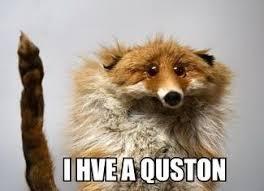 Question Meme - i have a question memes
