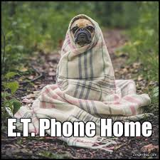 Dog Phone Meme - et phone home funny dog meme glitter graphic greeting comment