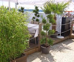 winterharte pflanzen balkon bambus als sichtschutz für terasse und balkon bambus und