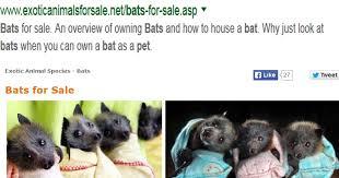 bats for sale pet bats animals for sale buyer beware