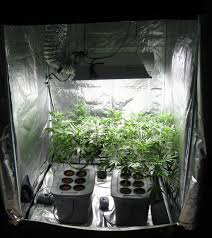 best grow rooms q a with j e best strains for a grow cabinet