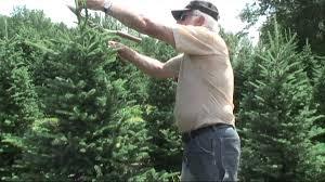 christmas tree trimming lesson mov youtube