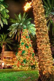 palm tree christmas tree lights lights trees deco christmas time here in innsbruck lovely