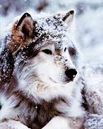 100 wolf home decor 8 dorm decor lessons they don u0027t