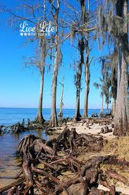 Louisiana travel trunks images 32 best fontaiebleau state park images state parks jpg