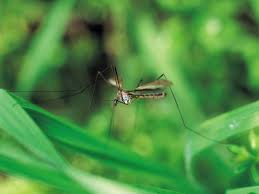 how to manage mosquitoes in the garden hgtv