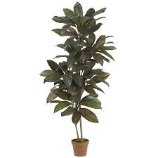tall pot plants 41 inspiring style for tropisk potted plant
