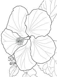 coloring pictures of hibiscus flowers hibiscus flower coloring pages hibiscus flower coloring pages 7
