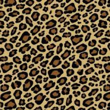 cheetah print wrapping paper leopard printed animal print gift wrap wrapping paper tissue noah s