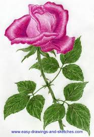 Picture Of Roses Flowers - 252 best drawing roses images on pinterest drawings rose
