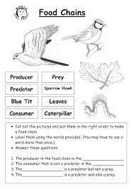 food chains and food webs worksheet answers 28 templates food