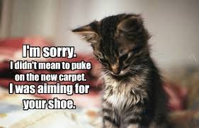 Puke Meme - lolcats puke lol at funny cat memes funny cat pictures with