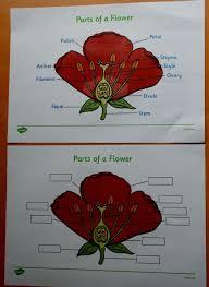 best 25 diagram of a flower ideas on pinterest diy smoker