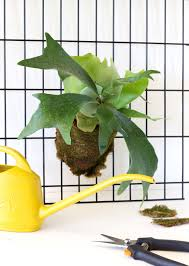 Best Low Light Plants 18 Best Indoor Plants Good Inside Plants For Small Space Gardening