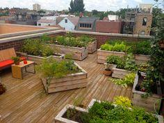 rooftop garden vegetable garden boxes this would be fabulous for