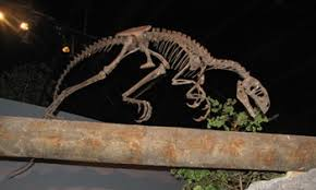 allosaurus roar s top twenty five american dinosaur museums