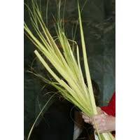 palms for palm sunday catholic relief services sells eco palms for palm sunday holy