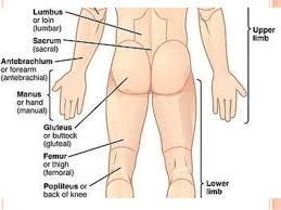 Human Anatomy Terminology Nomina Anatomica U0026 Anatomical Terminology
