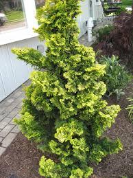 evergreen trees shrubs a guide to landscape design maintenance