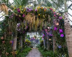 Botanical Garden Orchid Show Botanical Gardens Orchid Show 2018 The Best Garden Of 2018