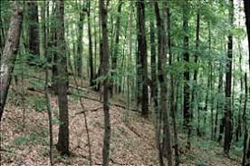 forests of indiana a 1998 overview what types of trees grow in