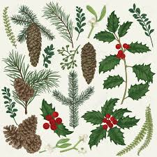 christmas plants vector set with christmas plants botanical illustration branch