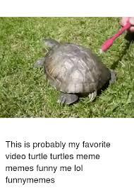 Turtle Memes - 25 best memes about turtle memes turtle memes
