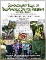 streamside native plants spring eco discovery tour u2013 big morongo canyon preserve the