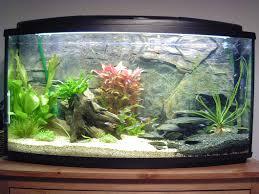 Home Aquarium by 20 Best Aquariums Images On Pinterest Aquariums Aquarium Ideas