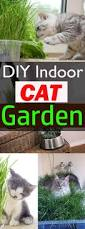 diy indoor cat garden for cat lovers cat garden step guide and