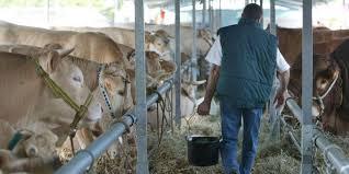 chambre d agriculture la rochelle agriculture le salon de l élevage de surgères va migrer à la