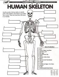 Anatomy Directional Terms Worksheet Muscle Archives Page 21 Of 36 Human Anatomy Chart