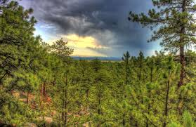 South Dakota forest images Free stock photo of sunset over the forest in the black hills jpg