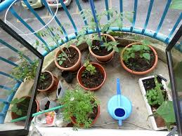 container gardening container gardening for urban preppers growing your own food